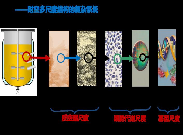 发酵过程多尺度参数相关分析原理与优化方法