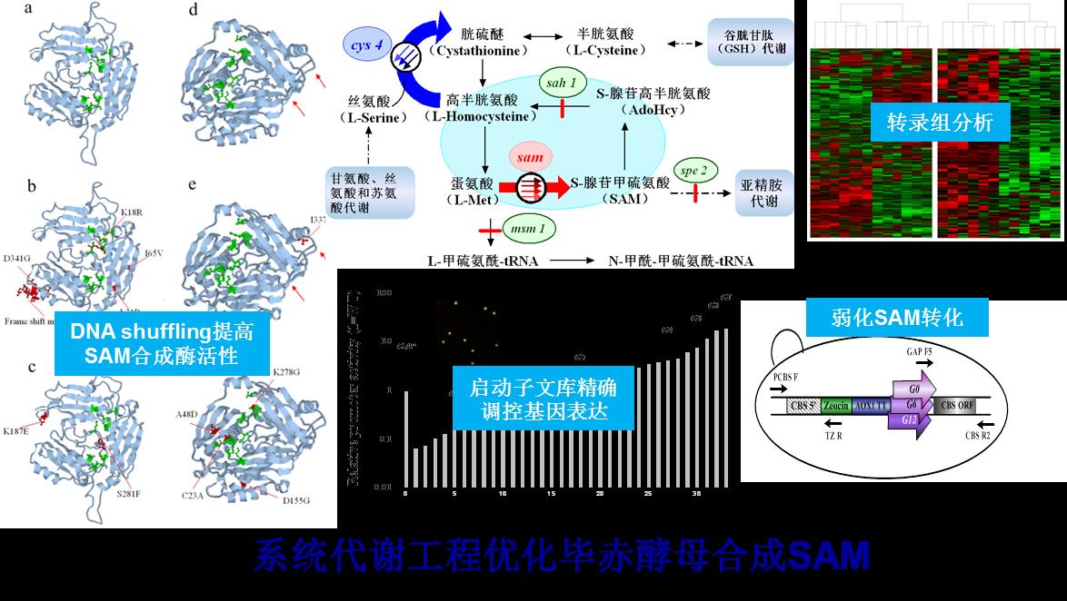 生物合成工程实验室<br>Biosynthetic Engineering Laboratory