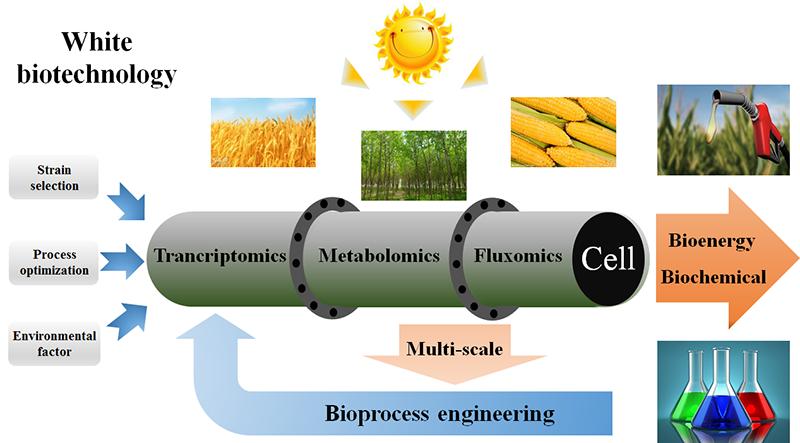 生物能源与生物基化学品过程研究室