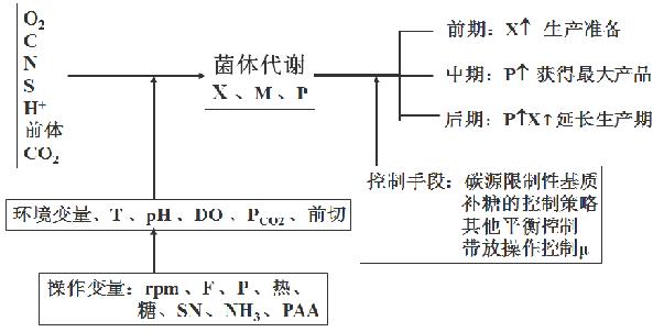 青霉素发酵过程优化控制