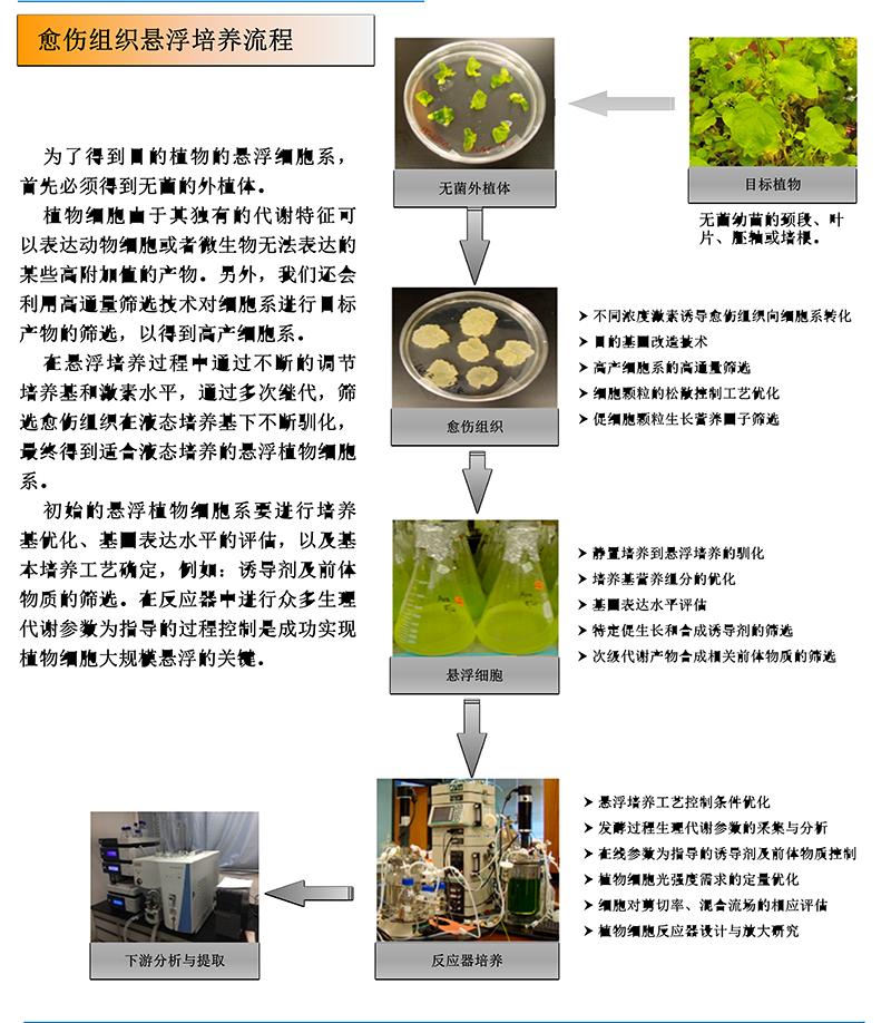 植物细胞大规模培养过程优化与反应器装置