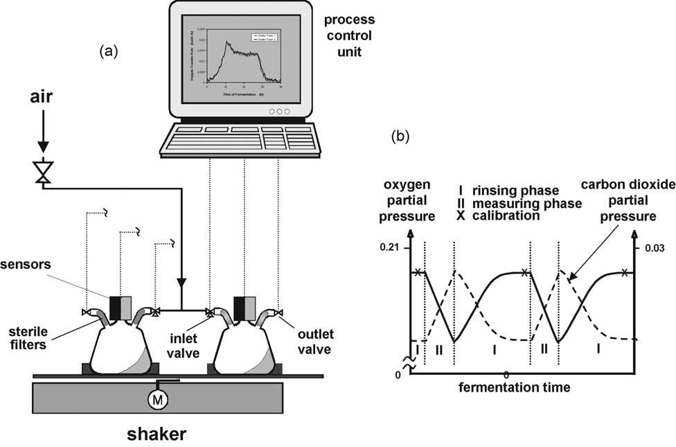 尾气在线分析在发酵过程控制与优化中的应用研究——氧气消耗速率、二氧化碳生成速率以及氧传质系数的测量